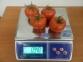 Весы фасовочные Олимп 4 - 1